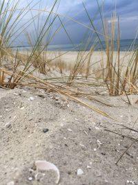 Strandhafer Prerow Strand